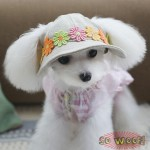 Pets Dogs Cats Flowers Fisherman Cap Hat