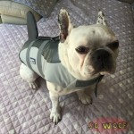 Pets Dogs Cats Swim Suit Life Jacket Grey Shark Style