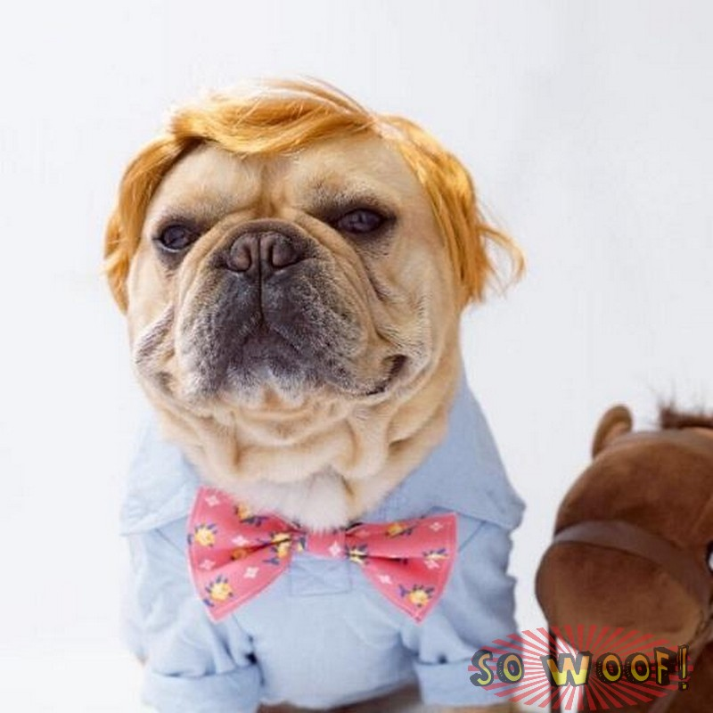 Pets Dogs Cats Short Blond Hair Wig For Photoshoot Funny Cute