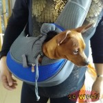 Pets Dogs Cats Shoulder Body Bag Carrier