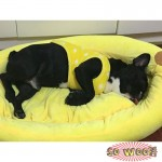 Pets Dogs Cats Yellow Banana Boat Beds