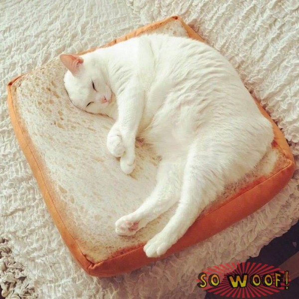 Pets Dogs Cats Square Toast Slice Bread Bed