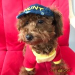 Pets Dogs Cats Hip Hop Jeans Denim HUNT RIpped Cap Hat