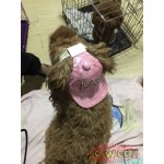 Pets Dogs Cats Hip Hop Sequins Bling Bling Stars M Baseball Cap Hat