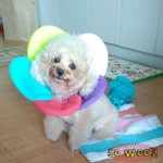 Pets Dogs Cats Flower Collar Cone of Shame Elizabethan Cone
