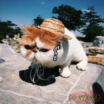 Pets Dogs Cats Country Farmer Hat for Photoshoot Funny Cute Costume