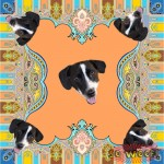Pets Dogs Cats Portrait Pink Customized Retro Ethnic Silky Scarf