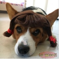 Cute Long Hair Wig for Pets