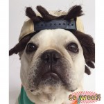 Pets Dogs Cats Reggae Braids Dreadlock Hair Wig for Photoshoot Funny Cute Costume