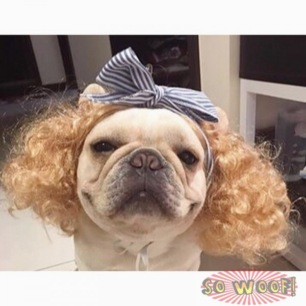 Pets Dogs Cats Curly Blond Hair Wig for Photoshoot Funny Cute Costume FUN FUN FUN!